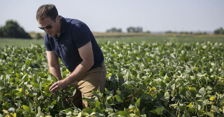 United States seeks to pay $2 per bushel for Soybeans to help farmers