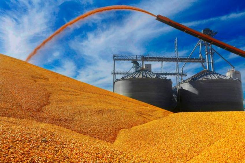 US Soybean, Wheat futures' prices hit highest level since Summer of 2018