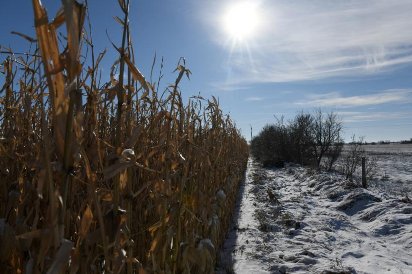 """US farmers on the verge of another bleak year despite """"Phase One"""" trade deal"""