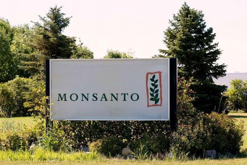 Monsanto won patent victory over GM cotton seeds in India