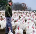 China to lift US poultry ban, will boost US exports by $1 billion per annum